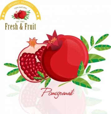 pomegranate advertisement red green icon shiny design