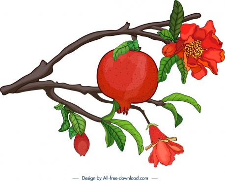 pomegranate branch icon classical multicolored design