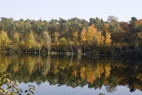 pond mirroring emerge
