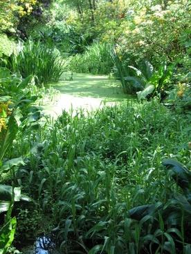 pond pond plant green