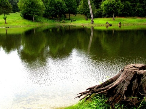 pond water green