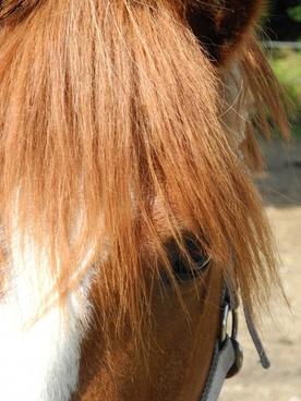 pony horse ride