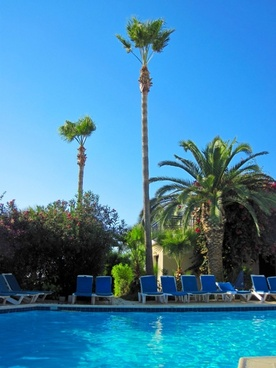 pool and palm tree