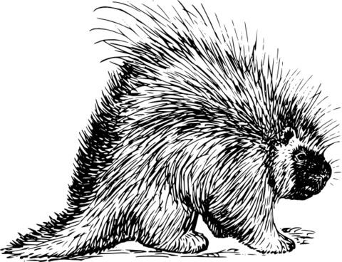 Porcupine Rodent clip art