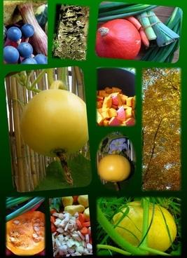 poster pumpkin autumn