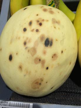 postharvest rot of organic honeydew melon