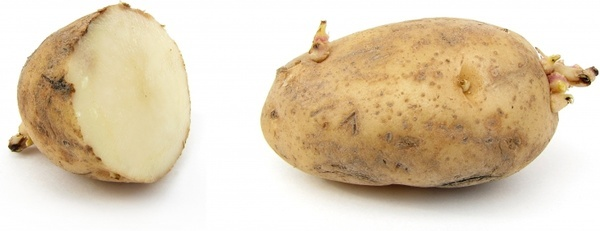 potato earth apple russet burbank potato
