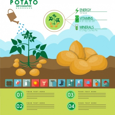 potato infographic fruit tree water icons multicolored design