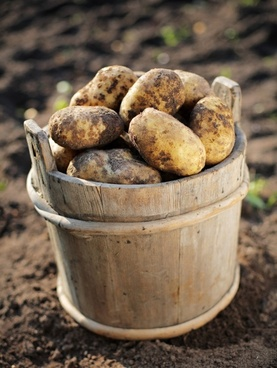 potatoes highdefinition picture 2