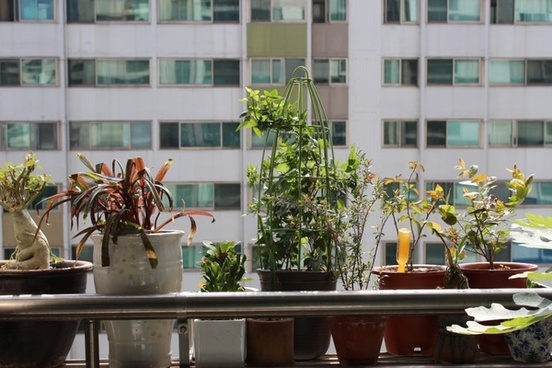 potted plant apartments veranda