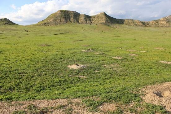 prairie dog town at theodore roosevelt national park north dakota