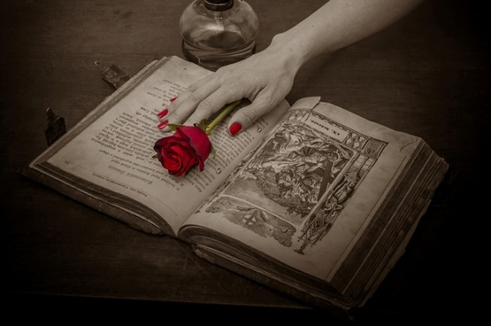 prayer book rose red rose