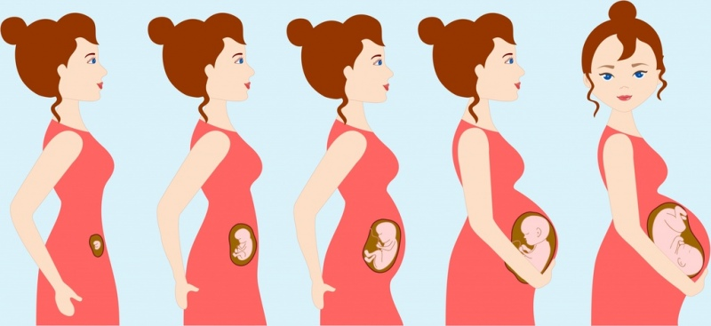 pregnancy background woman gestation steps icons cartoon character