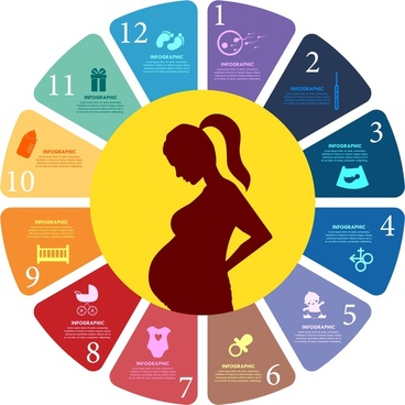 pregnancy concept design with colored infographic style