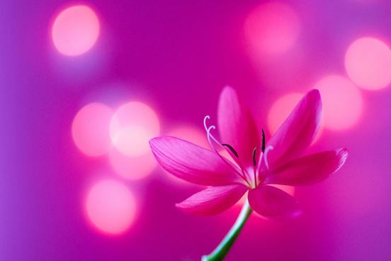 pretty in pink the winner