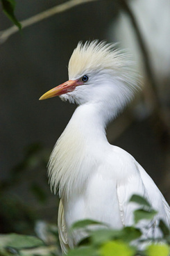 pretty white bird