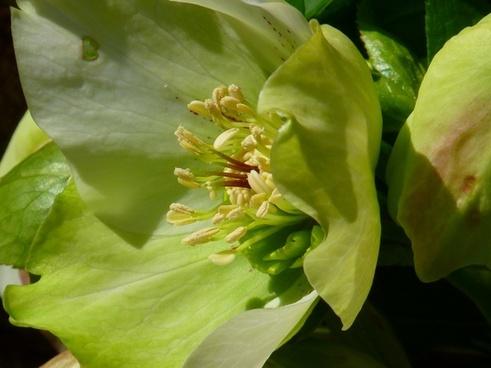 prevalence rose flower spring