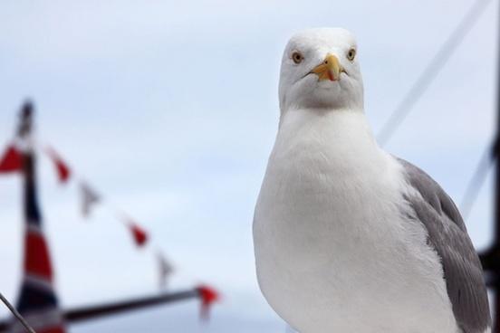 proud seagull