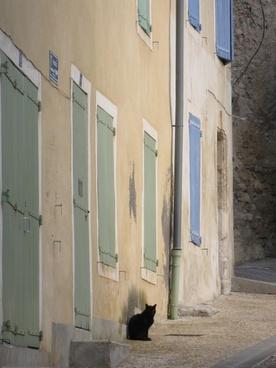 provence village cat