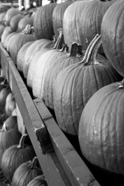 pumpins fall black and white