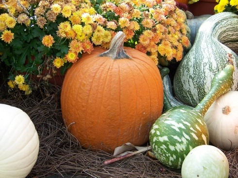 pumpkin and gourds