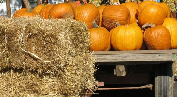 pumpkins and straw