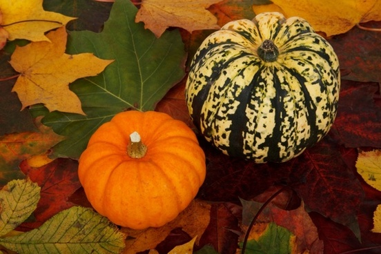 pumpkins on colorful leaves
