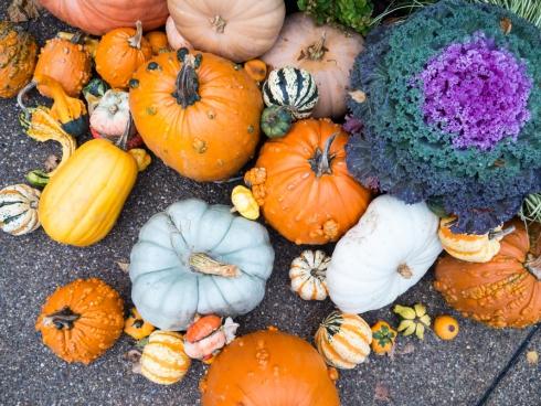 pumpkins with gourds