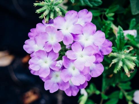 purple flowers 5