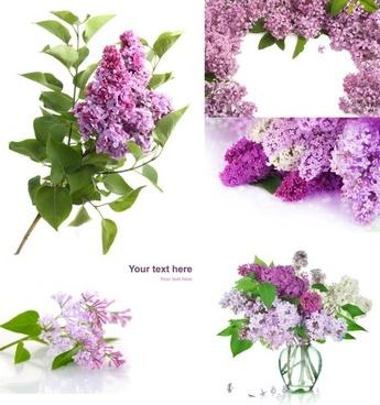 purple flowers hd picture nonoriginal works