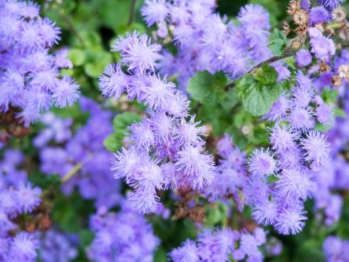 purple flowers in garden 2