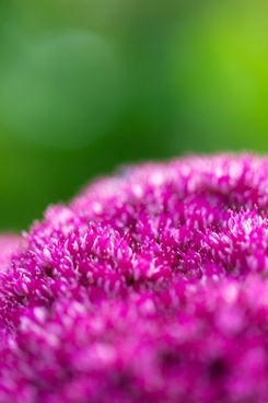 purple flowers on green background