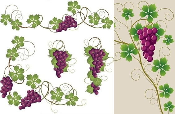 Grape Vine Drawings Free Vector Download 92 762 Free Vector For Commercial Use Format Ai Eps Cdr Svg Vector Illustration Graphic Art Design