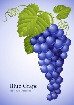 grapes background shiny blue green modern decor