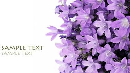 purple lilies fine picture