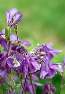 purple summer flowers