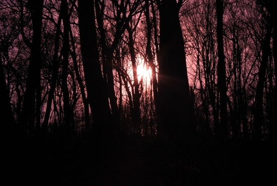 purple sun through trees at pikes peak state park iowa