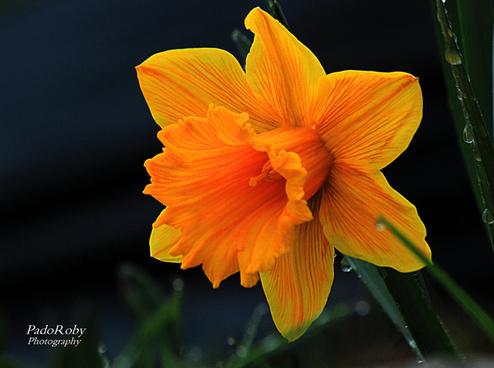 quot fleur de lamour pour toujours quot