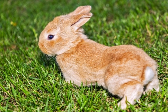 rabbit bunny pet