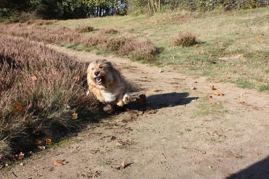 race terrier dog