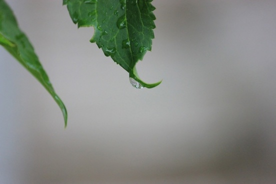 rain droplet on a leaf