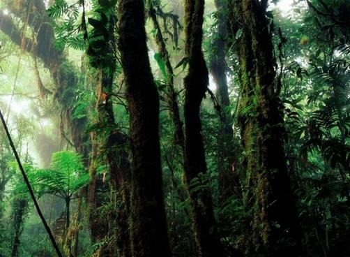 rain forest humid vegetation