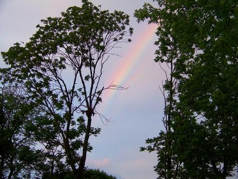 rainbow through the trees