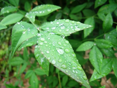 raindrops on plant