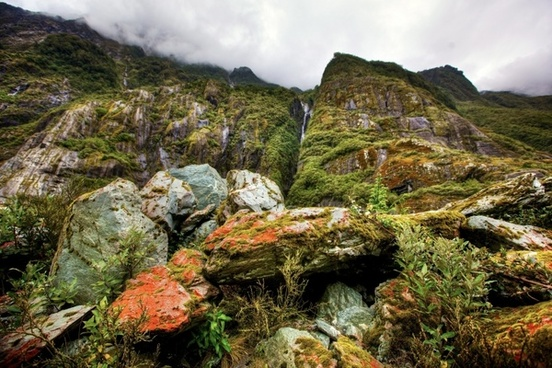 rainforest new zealand south island