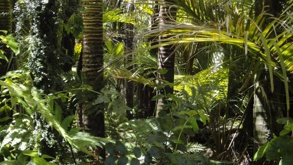 rainforest palm trees moss