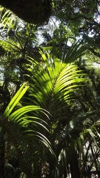 rainforest tree forest