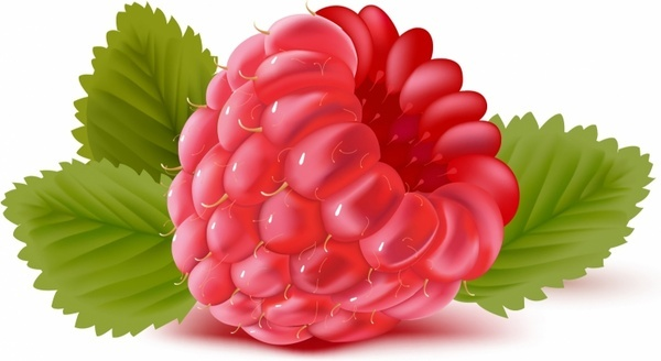 Raspberry vector free vector download (41 Free vector) for ...