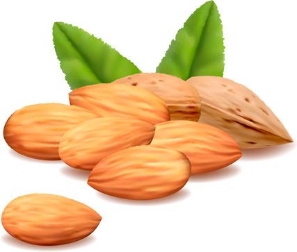 realistic almond vectors