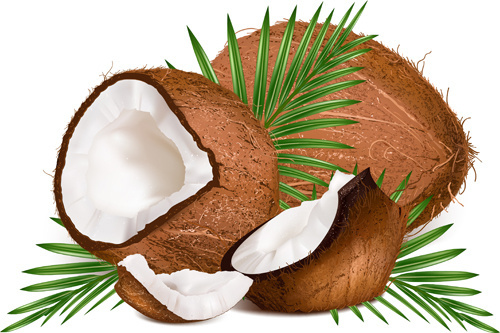 realistic coconut design vector